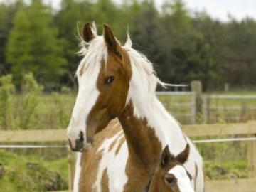 animali adorabili - famiglia di cavalli - cavalla e puledro