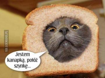 animali adorabili - Gattina sta facendo un panino