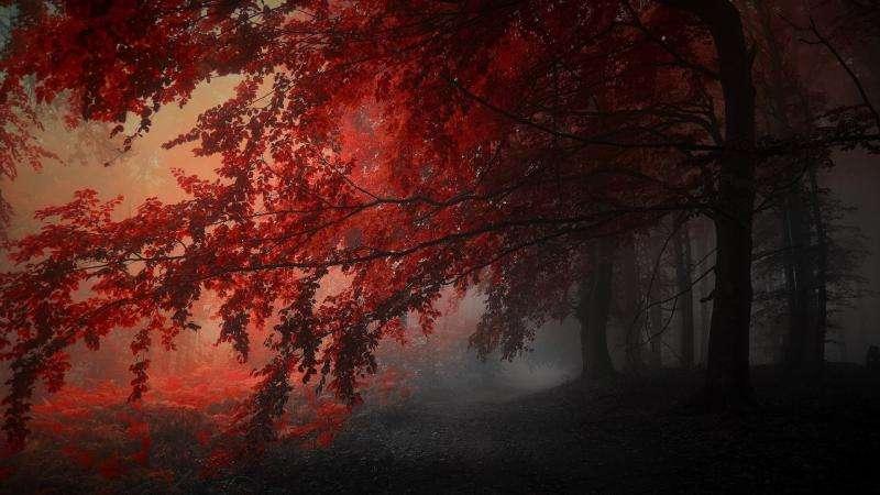 czerwono-czerwone puzle leśne puzzle