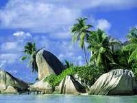 Tropikerna är fantastiska - Palmer, havet är något som alla gillar