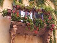 Balcon en fleurs. - Balcon en fleurs. Italie.