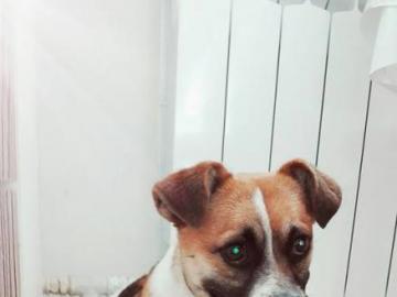 animali adorabili - cane dal rifugio