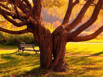 Parklandschaft. - Parc