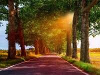 Vägen mellan träd. - Vägen bland träden vid solnedgången.