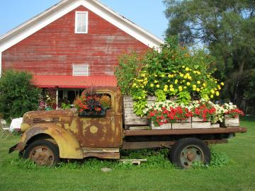 A truck full of flowers. - An old truck full of flowers.