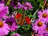 borboleta colorida - Borboleta colorida em flores