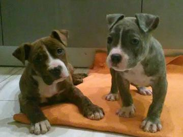 animali adorabili - animali adorabili - due cani