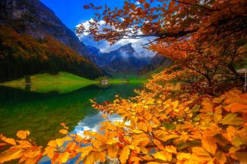 The beauty of nature. - Colorful trees. Lake. Beautiful autumn leaves. Colorful trees, colorful autumn leaves.