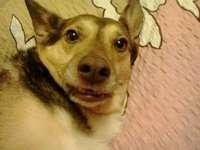 Chien surpris - Ma chienne Ron, elle aime habiller des visages différents.