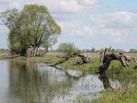 Warta River. - Un vieux village polonais fourchu.