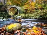 Irlande. - Belle Irlande du Nord. Belles feuilles d'automne. Arbres colorés, feuilles d'automne colo