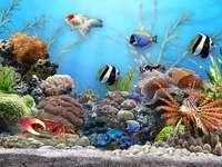 Hal az akváriumban.