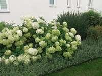 Boules de fleurs - Un jardin devant le presbytère de l'église paroissiale