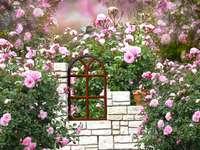 Rózsaszín rózsa.