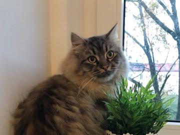 animali adorabili - Guardo e guardo fuori dalla finestra