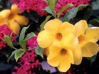 flowers c.d