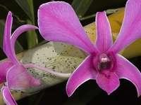 Blumen cd