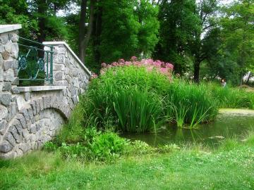 Un piccolo stagno nel parco. - Un piccolo stagno in un parco da una passerella di pietra.