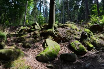 Lower Silesian nature - Somewhere in Lower Silesia