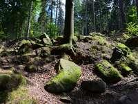 Neder-Silezische natuur