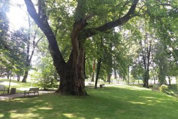 power of nature - park in Dubiecko with huge trees