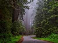 Национален парк Редвуд.