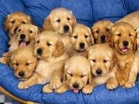 Кучешки братя и сестри
