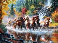 Красиви коне