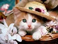 Een kat in een hoed