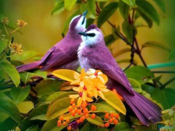Tauben in freier Wildbahn