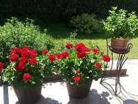 lato na tarasie - lato w pełni, donice z kwiatami