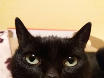 Majka - Box Cat - Majusia como cada gato ama las cajas.