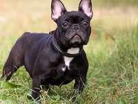 Um cachorro pequeno com um grande coração