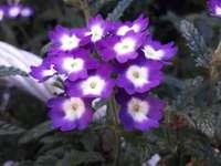 Fleur  - A flower growing in a basket