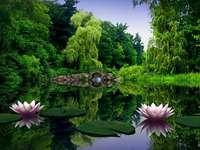 Uma lagoa no parque.