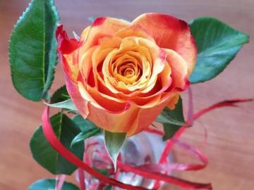 rosolia - Rose, la regina dei fiori. Tè rosa.