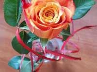 Рубела, чаена роза - Роза, кралица на цветята. Чайна роза.