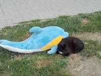 Kitty med en gosig leksak