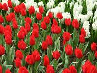white-red flowers - a field of white and red flowers.