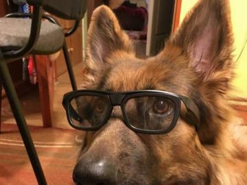 animali adorabili - animali amabili - cane con gli occhiali