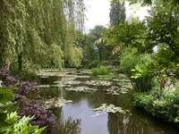Watertuin. - Groene watertuin in de zomer.