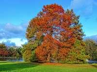 Podzimní strom.