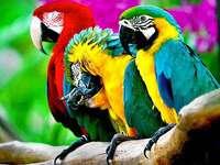 perroquets colorés