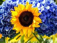 sunflower - colorful jigsaw puzzle