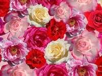 Цветни рози - пъстър пъзел