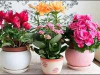 Цветни цветя - пъстър пъзел