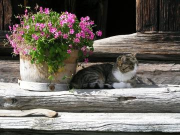 In the shade of flowers. - Cat in the shade of summer flowers.