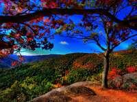 Automne  - Bellissimo autunno colorato in montagna.