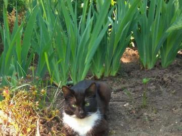animali adorabili - animali amabili - gattino in giardino