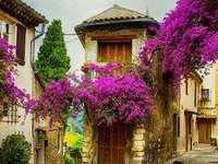 ruelle, fleurs - ruelle pittoresque, fleurs